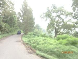 Jalan dan hutan di Ngadirejo